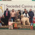 Concurso para perros con pedigrí