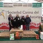 Mejor Perro Nacido en Asturias